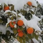 Света Гора за Божић покривена снегом
